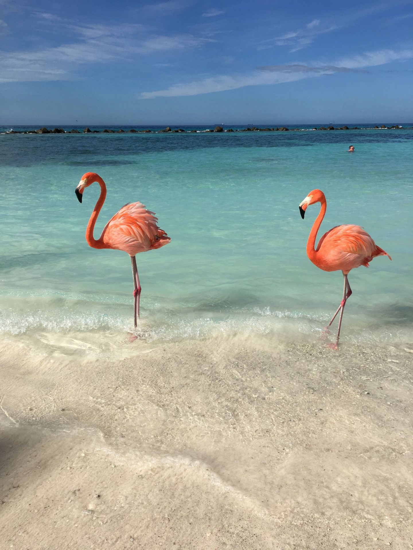 2 flamingos renaissance island aruba favorites
