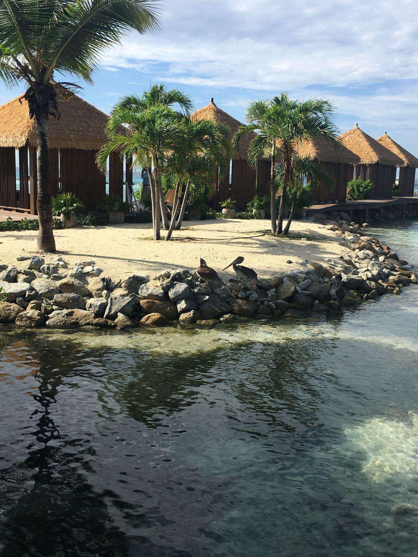 Aruba's flamingo island